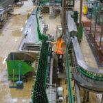 Abfüllanlage in der Brauerei Pilsner Urquell
