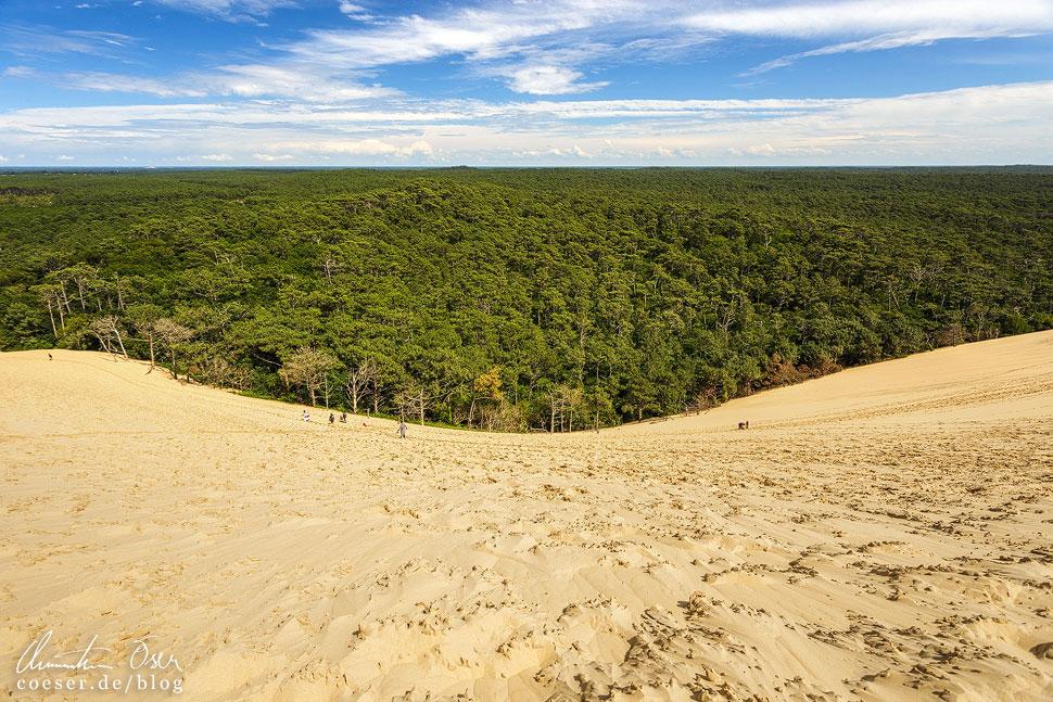 Blick in das Landesinnere auf einen schier unendlich großen Kiefernwald