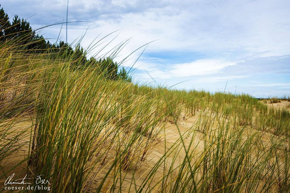 Die zahlreichen langen Gräser erinnern an die Landschaft der deutschen Insel Sylt