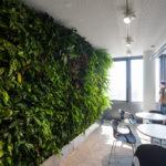 Pflanzen in den Büros der ÖBB Unternehmenszentrale in Wien