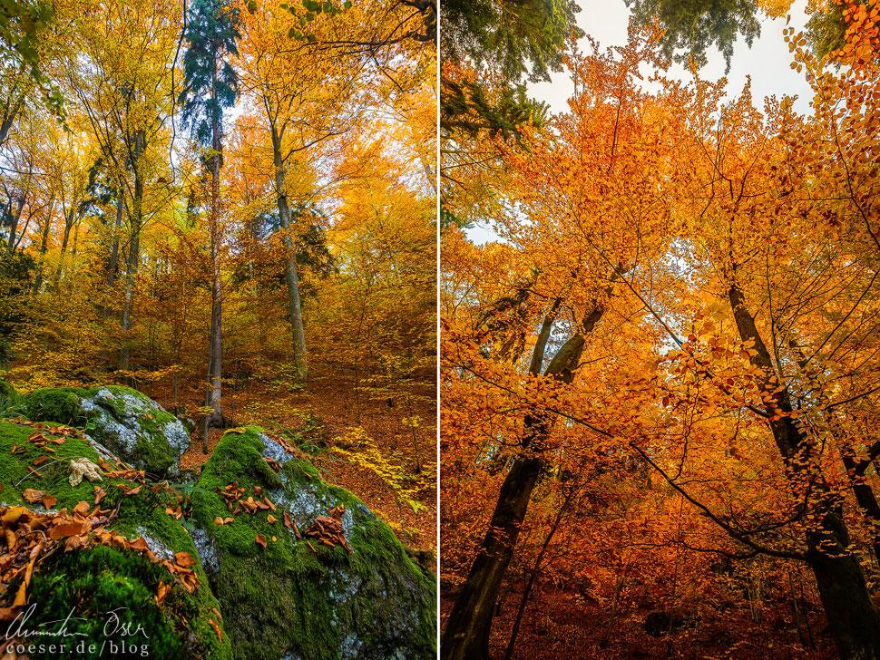 Die Bäume präsentieren sich in einer unglaublichen Farbpracht