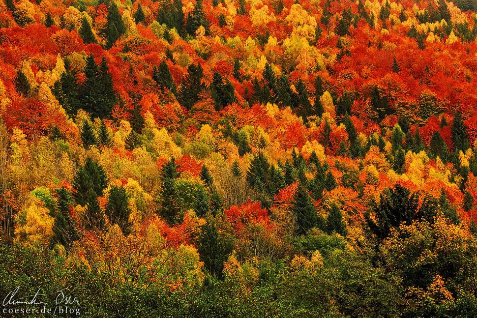 Die Wälder in der sichtbaren Entfernung bieten ein famoses Naturschauspiel