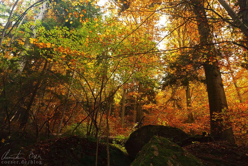 Es lohnt sich einmal stehenzubleiben und den Geräuschen des Waldes zu lauschen