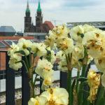 Blick von der Dachterrasse des Apartment Hotel Nürnberg in Richtung Lorenzkirche
