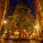 Zwischen den engen Gassen der Altstadt Gamla Stan ist sogar noch Platz für einen großen Baum