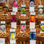 Wer für den Garten daheim Blumenzwiebel sucht, ist auf dem Bloemenmarkt gut aufgehoben