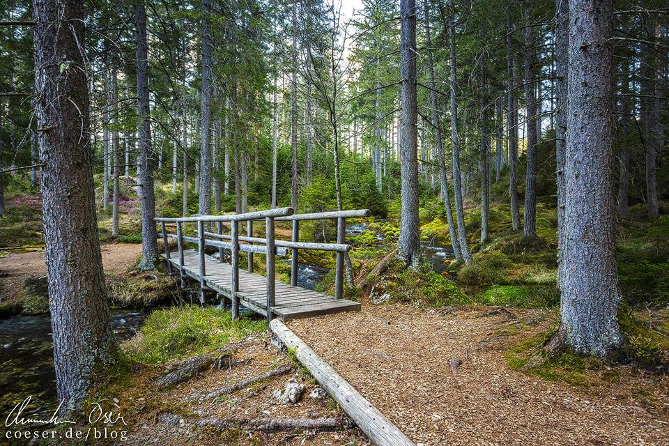 Brücke beim Kreuzteich nahe des Grünen Sees