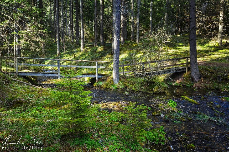 Holzbrücke im Wald beim Pfarrerteich nahe des Grünen Sees