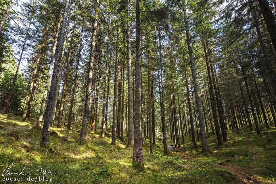 Waldweg zum Grünen See