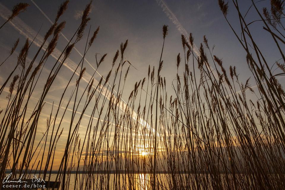 Schilfgürtel im Nationalpark Neusiedler See – Seewinkel