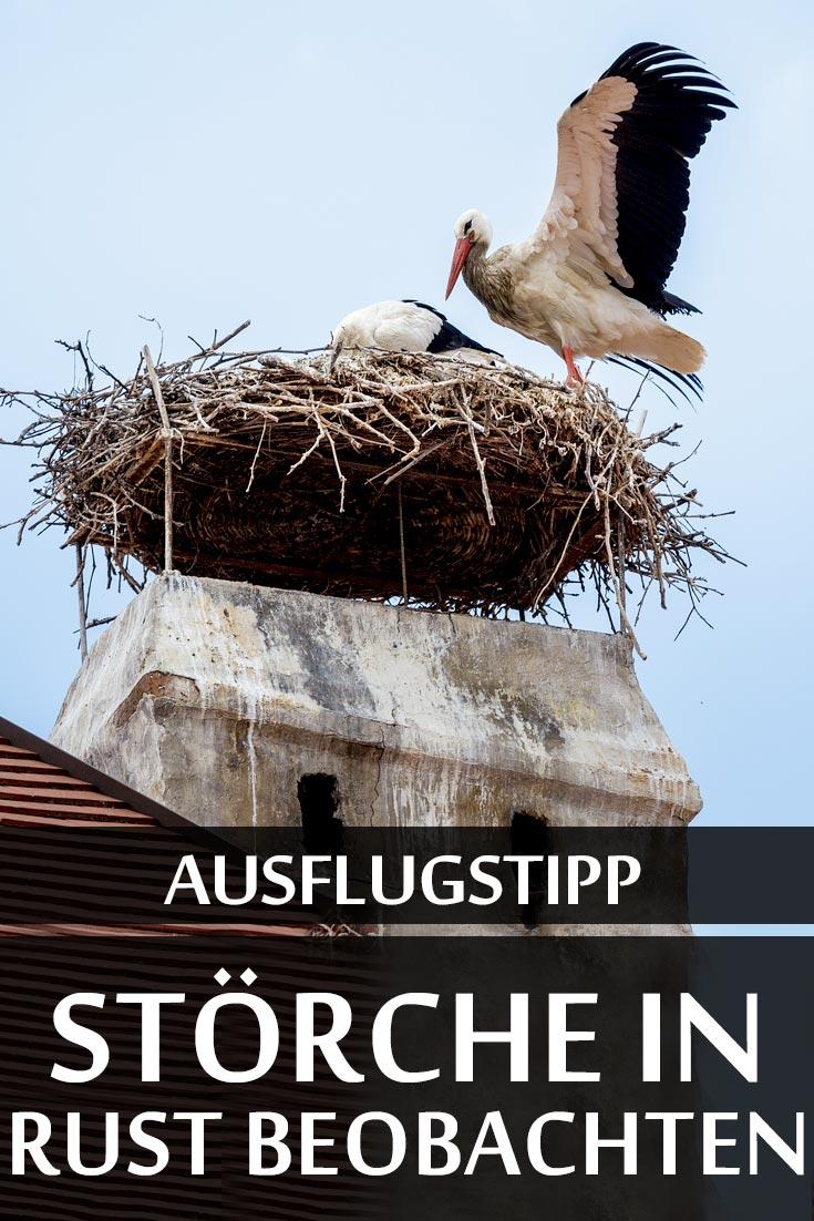 Ausflugstipp: Störche in Rust im Burgenland mit den besten Fotospots und Tipps zu Unterkünften sowie Restaurants.