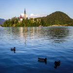 Drei Enten vor der kleinen Insel am Bleder See