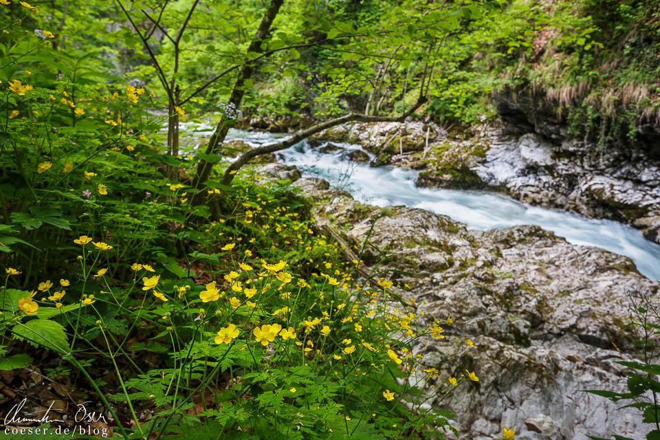 Die Vintgar-Klamm nahe Bled
