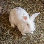 Ein Hase auf dem Bauernhof Lechnerhof