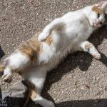 Eine Katze auf dem Bauernhof Lechnerhof