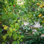 Der Hofgarten (Patio) mit Orangen- und Zitronenbäumen in der Seidenbörse (Lonja de la Seda)