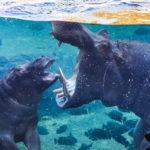 Eindrücke aus dem Tiergarten Bioparc in Valencia