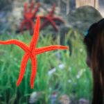 Innenansicht des Aquariums Oceanogràfic in der Stadt der Künste und Wissenschaften