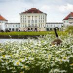 Schloss Nymphenburg und eine Gans vom Schlosspark aus gesehen