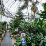Die Pflanzenwelt im Wintergarten des People's Palace And Winter Garden in Glasgow
