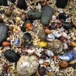 Tausende bunte Muscheln auf dem Weg zum Coral Beach