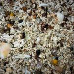 Nahaufnahme der gebleichten Algenstücke auf dem Coral Beach