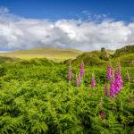 Fairy Glen, das Tal der Feen auf der Isle of Skye