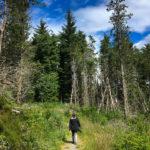 Der Wanderweg führt durch einen Wald
