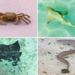 Eine Auswahl an Tieren, denen man auf der Insel Meeru (Malediven) begegnen kann (Krabben, Babyhaie, Rochen, Moränen)