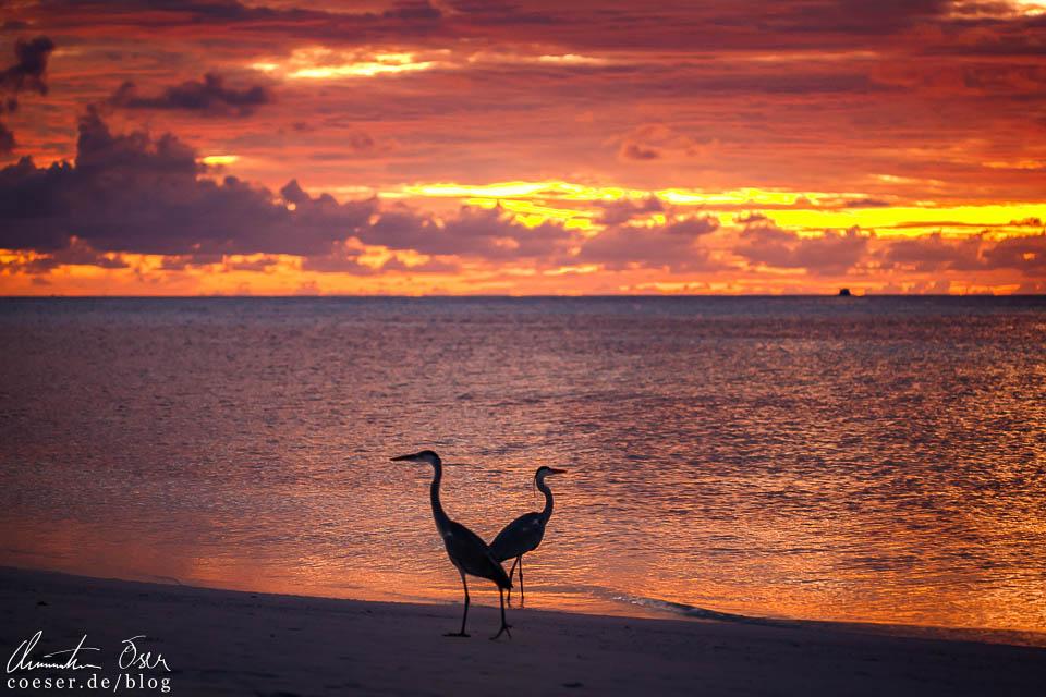 Sonnenuntergang auf der Insel Meeru (Malediven)