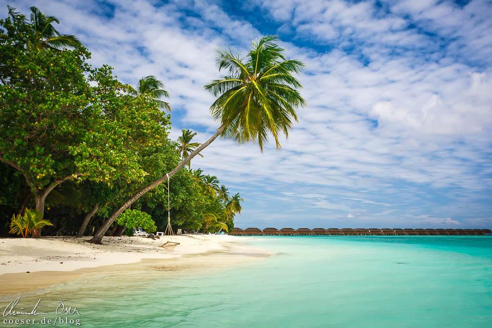 Schiefe Palme und türkisblaues Wasser auf der Insel Meeru (Malediven)