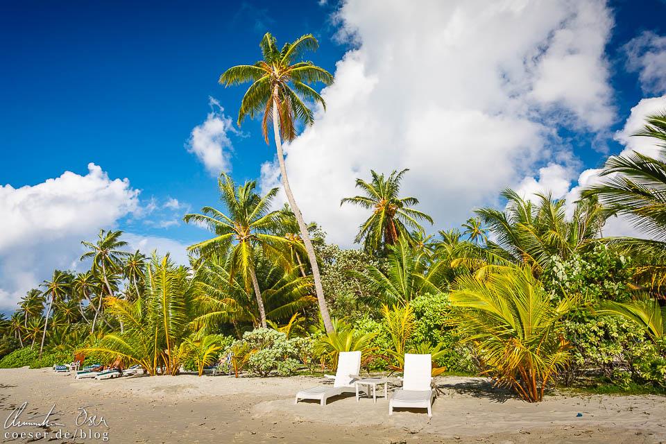Palmen am Strand auf der Insel Meeru (Malediven)