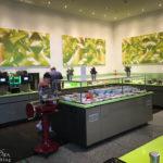 Frühstücksbuffet im elements pure FENG SHUI CONCEPT HOTEL in Bremen