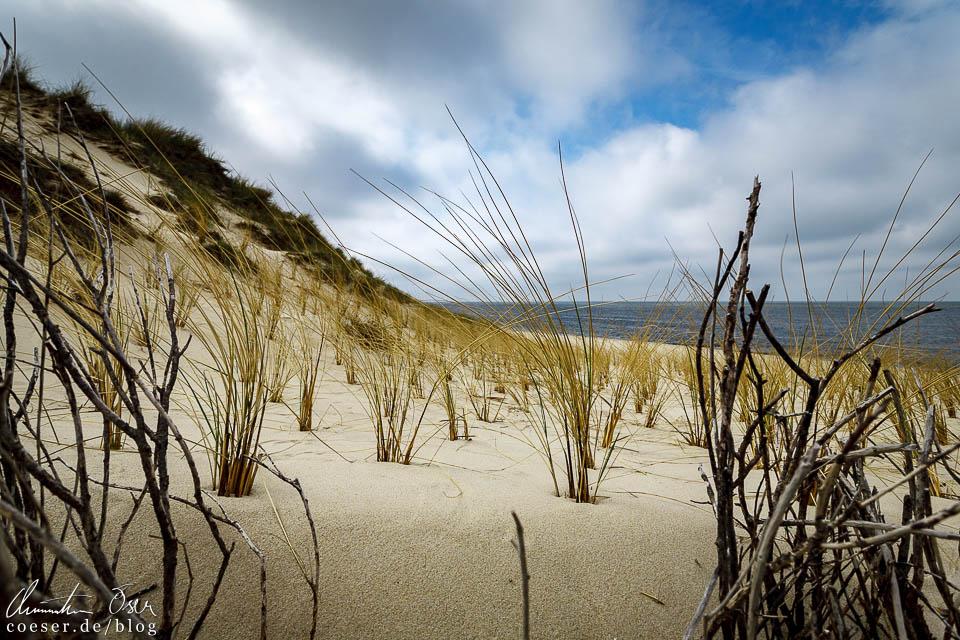 Küstenlandschaft auf Sylt