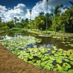 Seerosenteich im SSR Botanischen Garten auf Mauritius