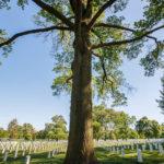Weiße Grabsteine auf dem Arlington National Cemetery