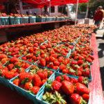 Frische Erdbeeren auf dem FRESHFARM Dupont Circle Market in Washington