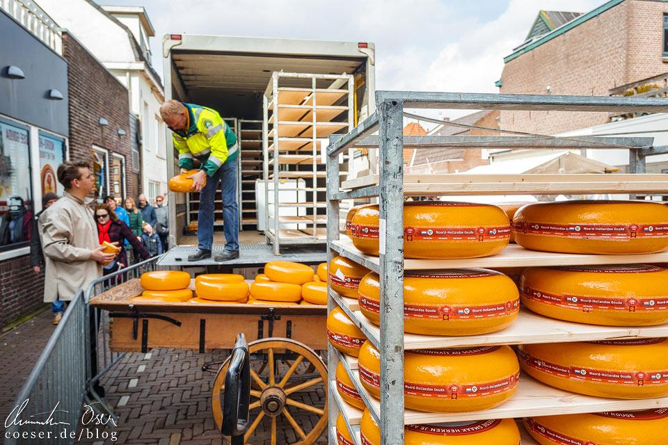 Käsemarkt Alkmaar: Ausladen der Käselaibe