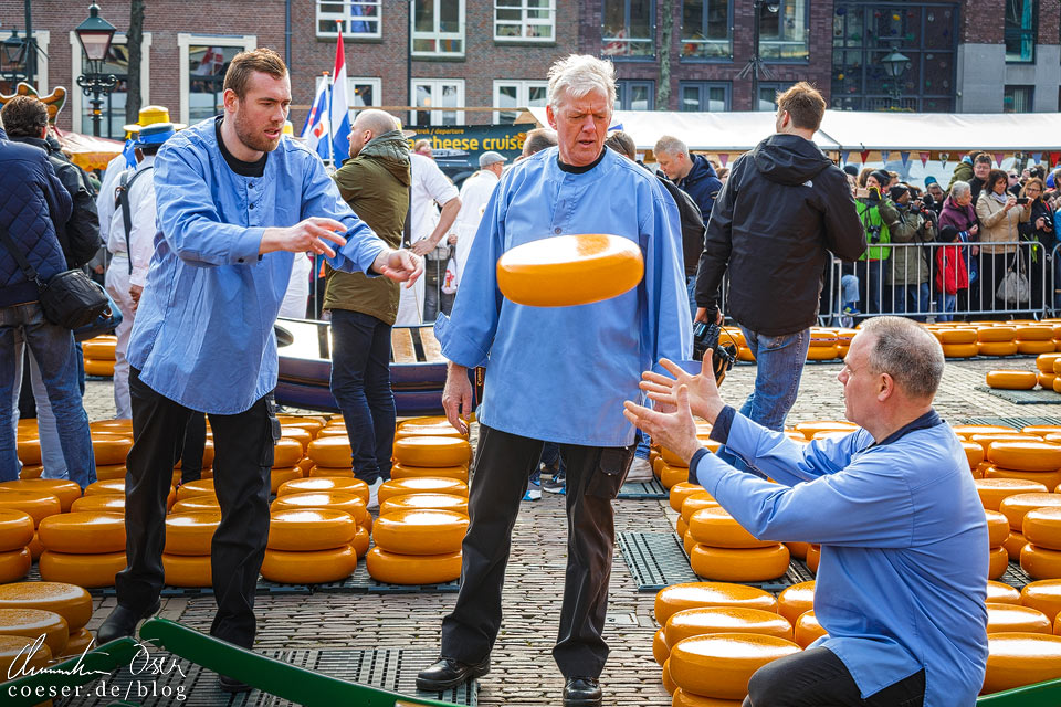 Käsemarkt Alkmaar: Setzer werfen mit Käse