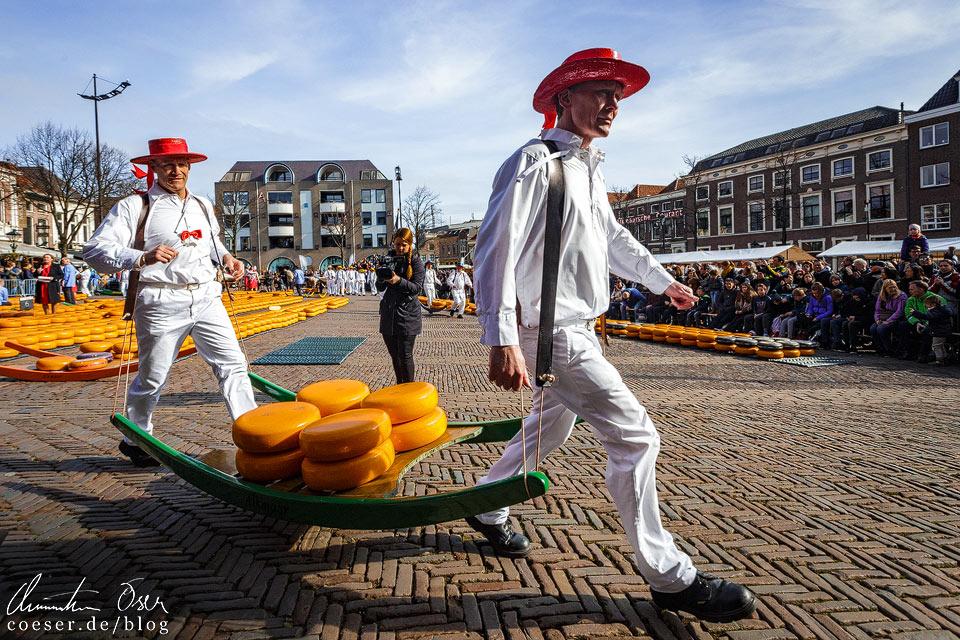 Käsemarkt Alkmaar: Käseträger auf dem Weg zur Waage