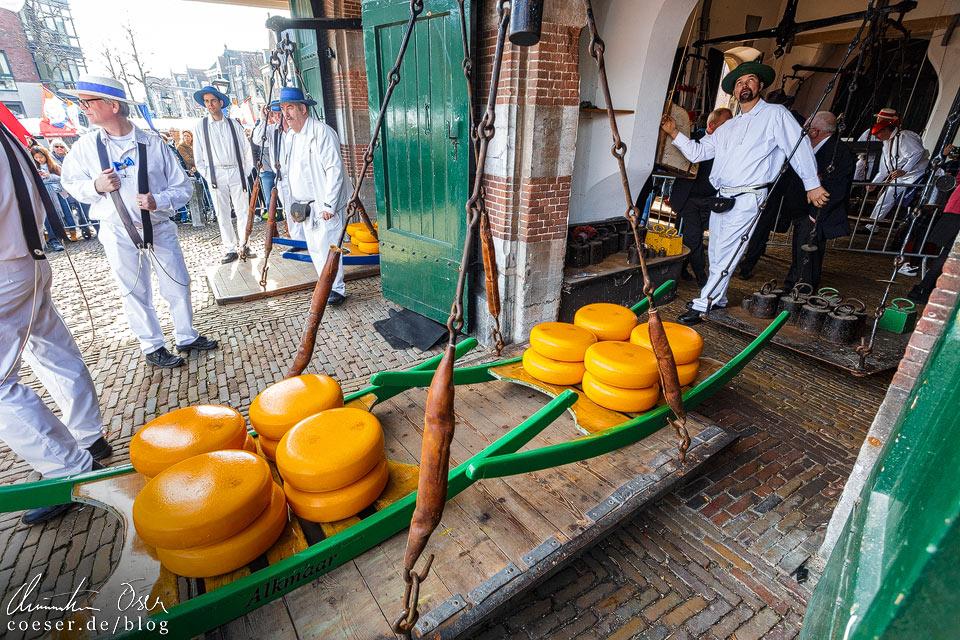 Käsemarkt Alkmaar: Wiegen des Käses