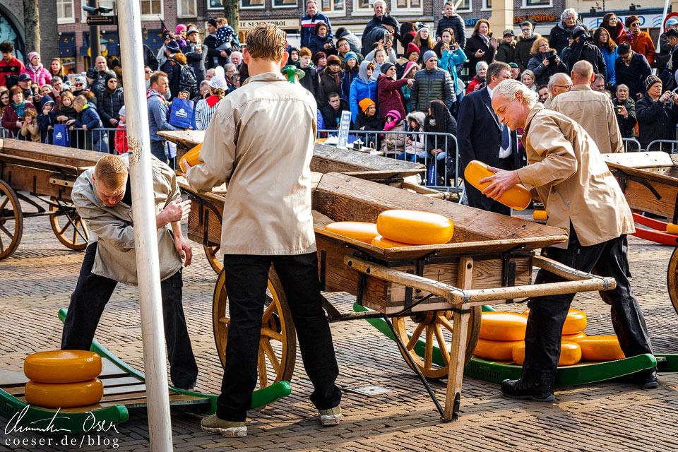 Käsemarkt Alkmaar: Einwerfer beladen die Holzwagen mit Käse