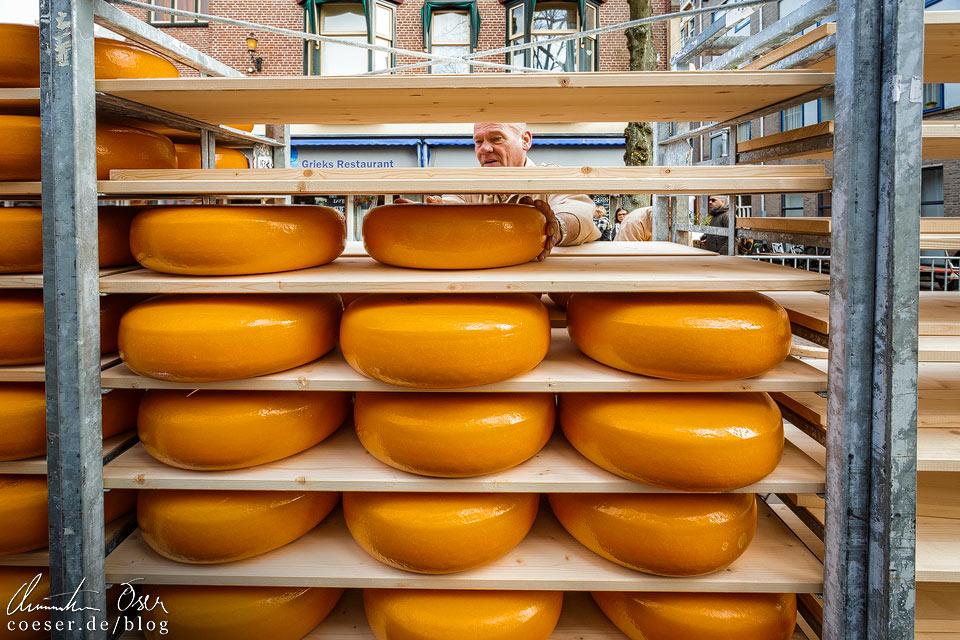 Käsemarkt Alkmaar: Beladen der LKWs mit Käse