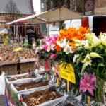 Blumenmarkt vor der Laurenskerk von Alkmaar