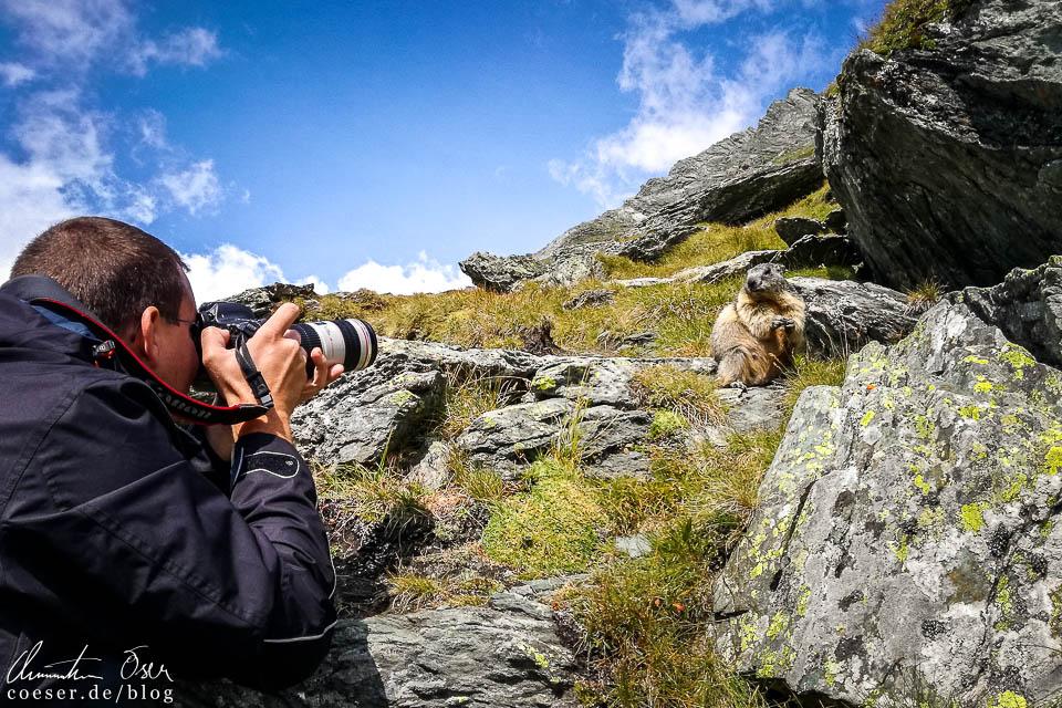 Murmeltiere auf der Kaiser-Franz-Josefs-Höhe