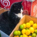 Katze im Minisupermarkt gegenüber des Parkhotels Den Haag