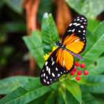 Ein Schmetterling im Tiergarten von Rotterdam (Diergaarde Blijdorp)