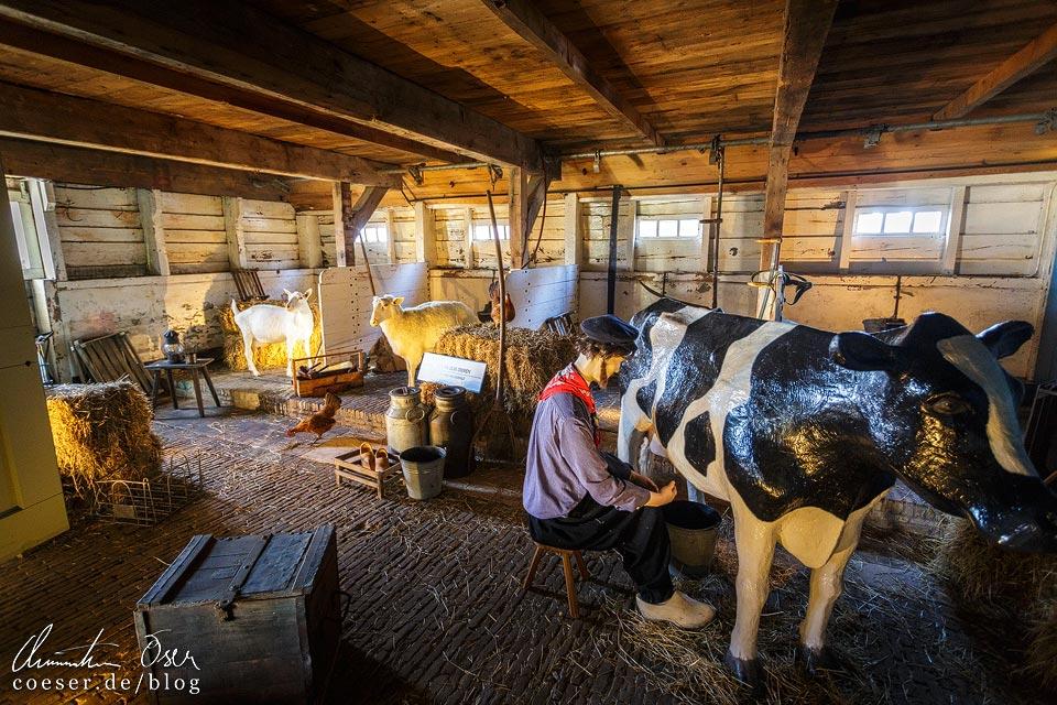 Kaasmakerij (Käserei) in Zaanse Schans