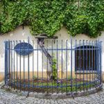 Die älteste Rebe der Welt in Maribor