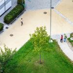 Der anlässlich des 90. Geburtstags von Architekt Harry Glück gepflanzte Glück-Baum im Wohnpark Alterlaa während Open House Wien 2018